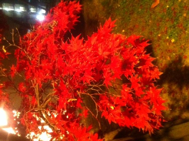 京都の紅葉はピークをすぎた
