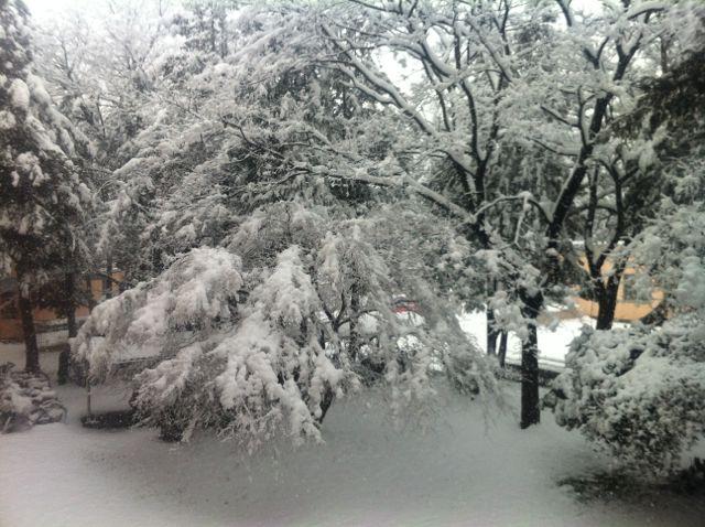 カーテンを開けると そこは雪だった